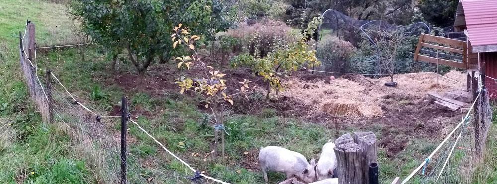 Pigland 02 170415