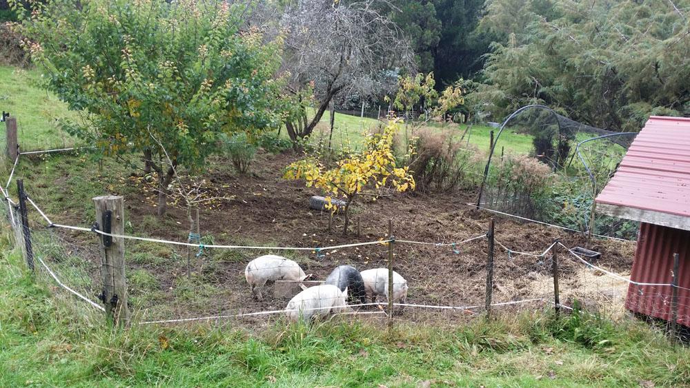 Pigland 03 270415
