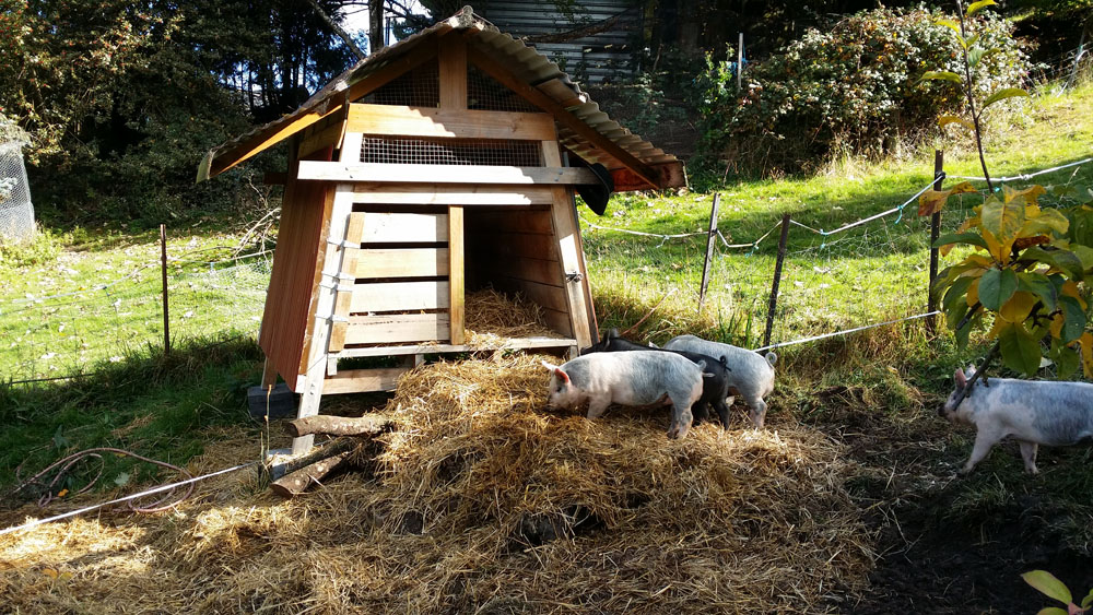 pig house ramp sm