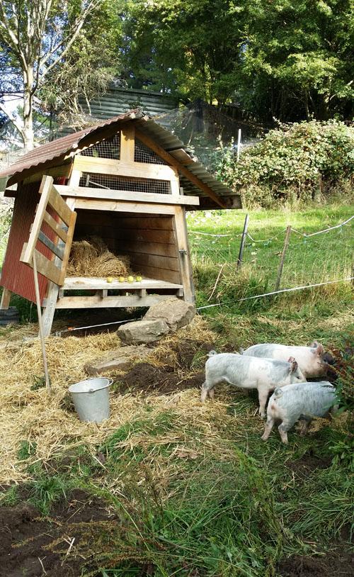 pig house rocks sm